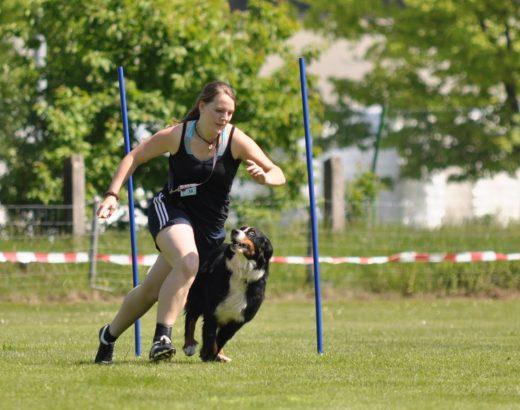 Frau rennt mit Berner Sennenhund im Turnierhundsport.