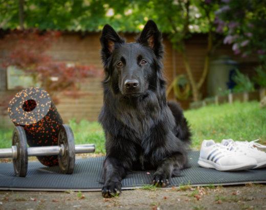 Sporthund liegt auf einer Matte im Garten.