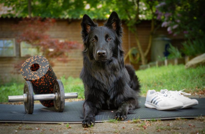 Warum Physiotherapie wichtig für den gesunden Sporthund ist
