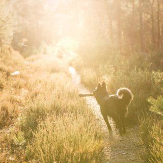 Mit Vollgas ab ins Wochenende 🥳  Wir wünschen Euch ein paar erholsame und entspannte Tage. ☺️ . . . #tervueren #groenendael #workinggroenendael #belgianshepherd #belgischerschäferhund #dogphotography #hundefotos #hundefotografie #lightloovers #hundesport #workingdog #pfalzliebe #naturliebe #naturelovers